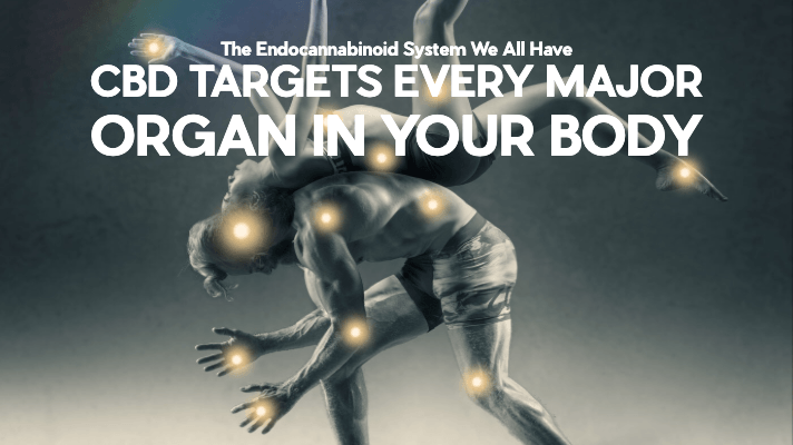 CBD Targets Every Major Organ In Your Body