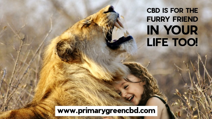 CBD Is For The Furry Friend In Your Life Too!